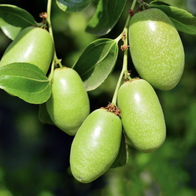 Hero ingredient jojoba
